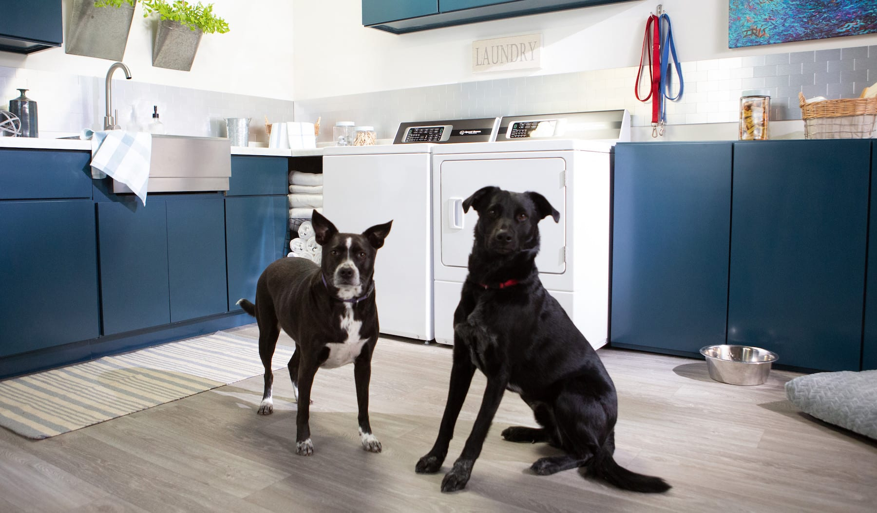 From Our Home to Yours – a Solution for Pet Hair