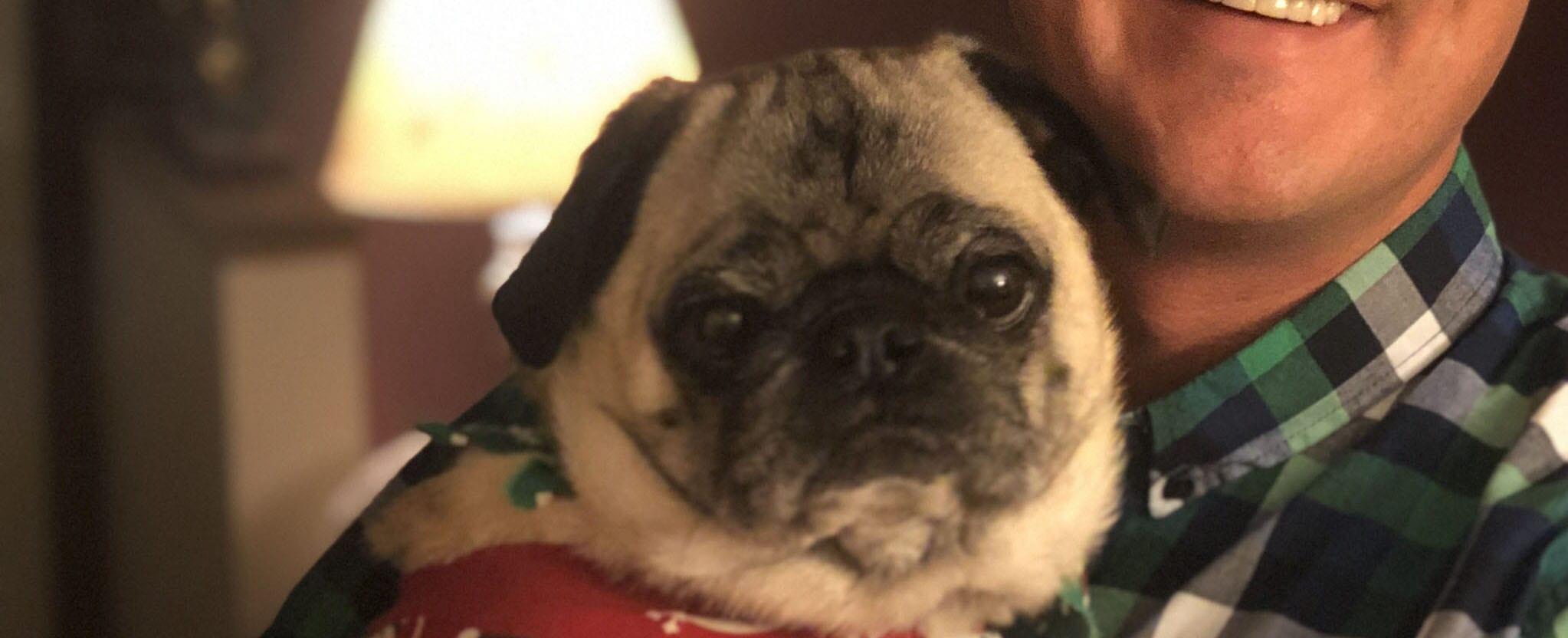 Meet the pets: Walter