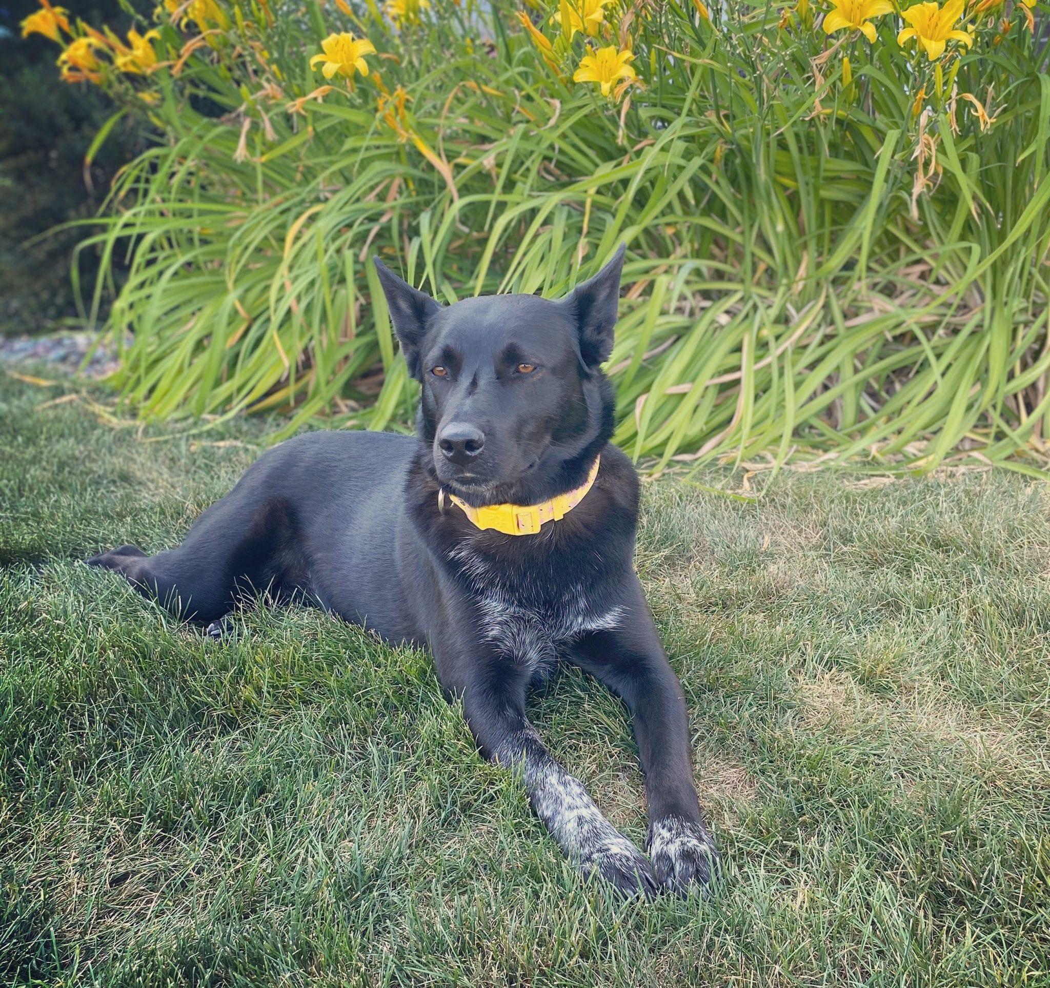 Meet the pet: Winnie