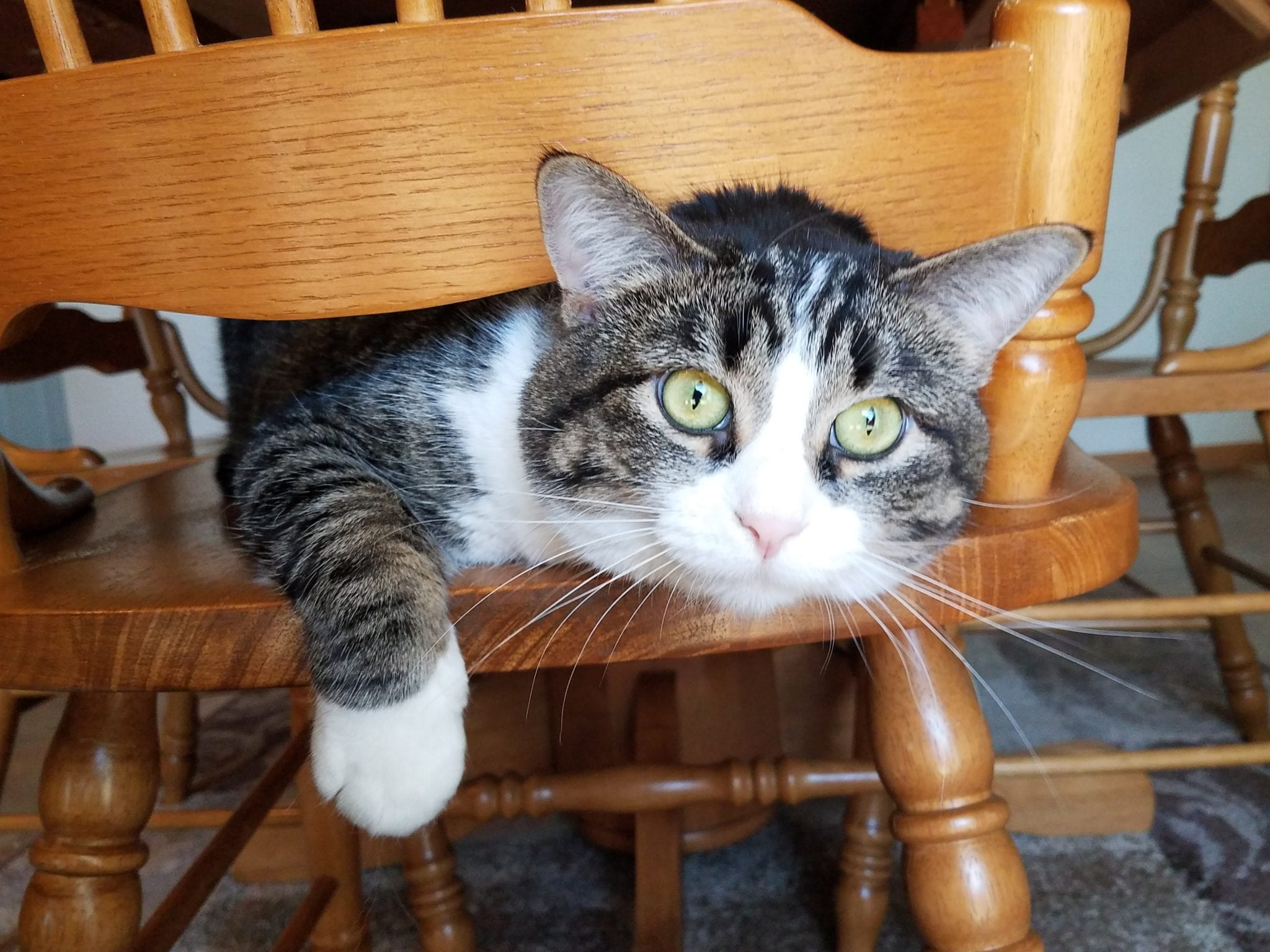 Meet the pet: Missy, K.C. and T.J