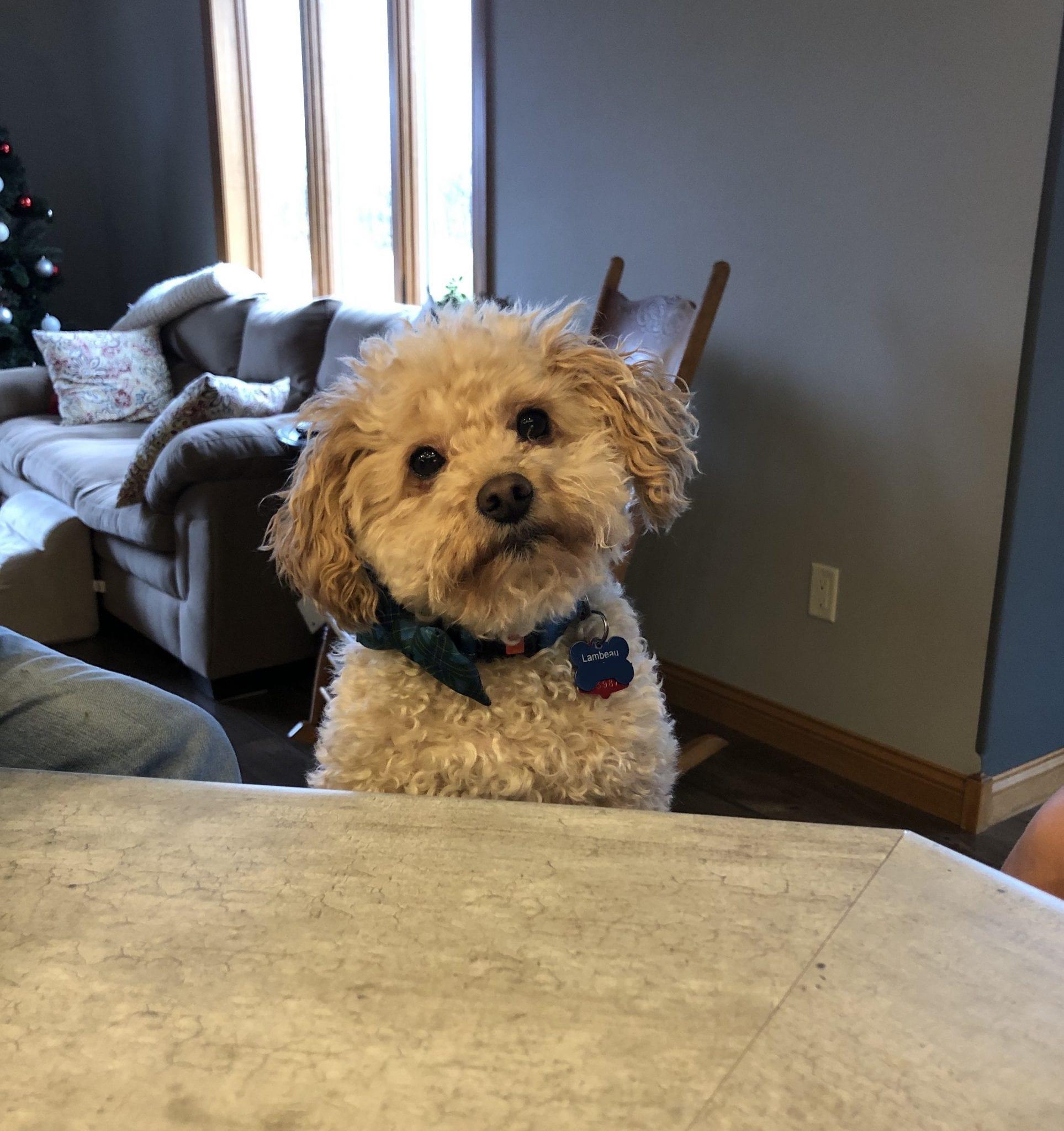 Meet the pet: Lambeau