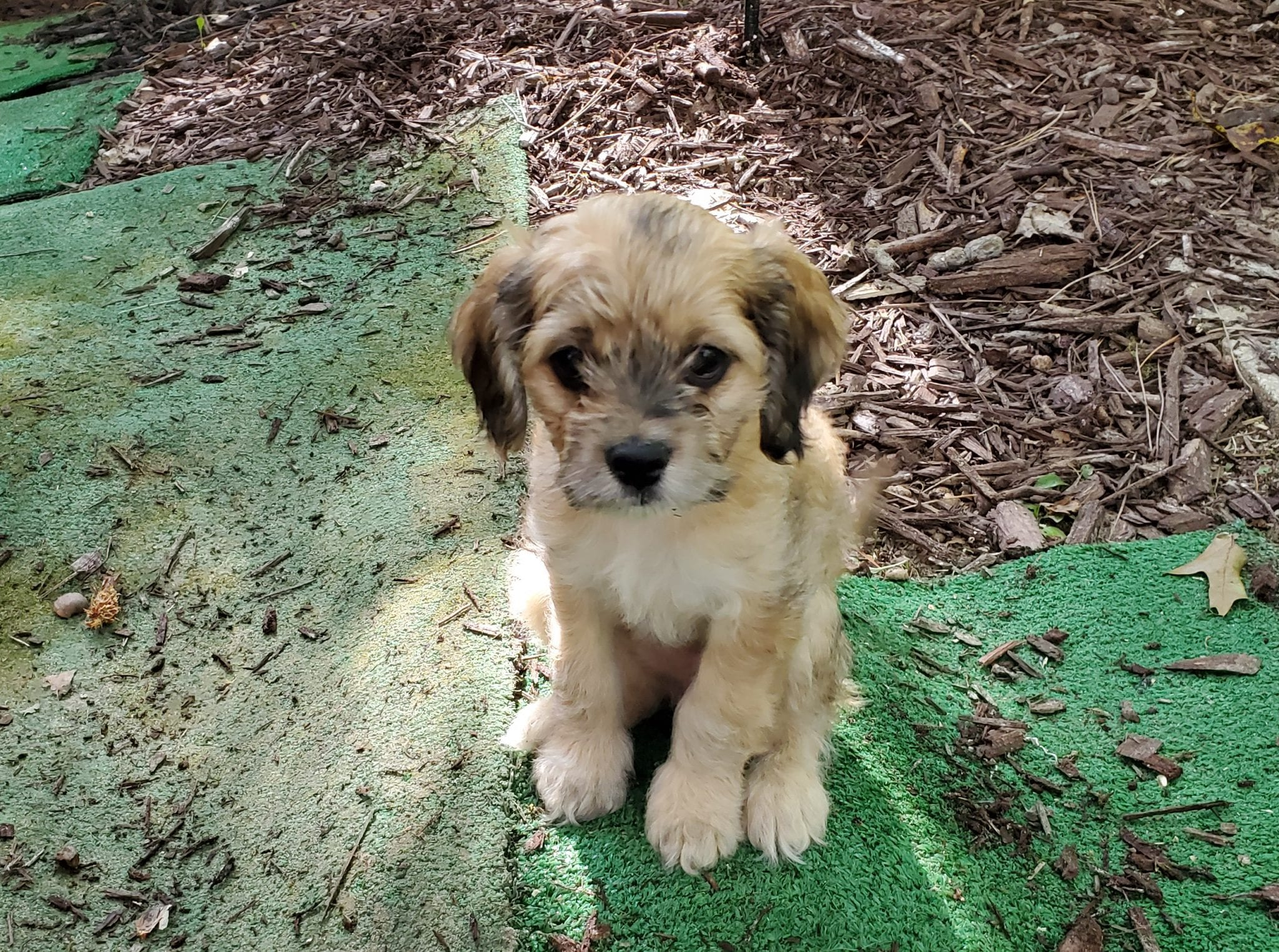 Meet the pet: Dexter, Mocha and Java