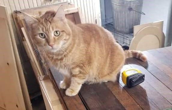Meet the pet: Ginger